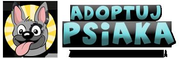 Schronisko Kraków – adopcje. Strona wolontariuszy | AdoptujPsiaka.pl